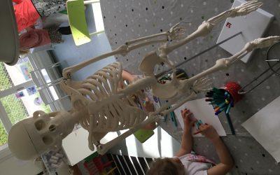 Vårt skelett