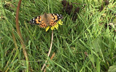 Adjö små fjärilar!