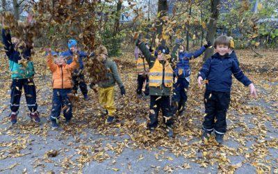 Kul bland löven i Lilleskog